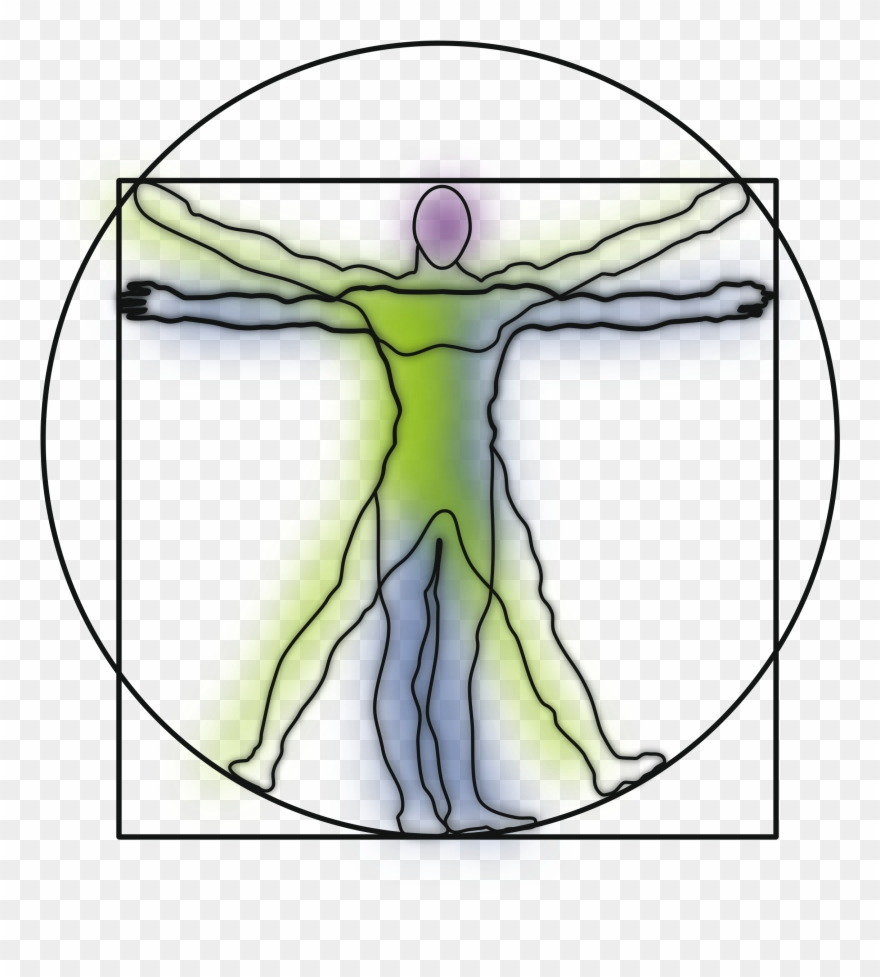 Vitruvian Man And Woman Clipart - Png Download (#2261571) - PinClipart