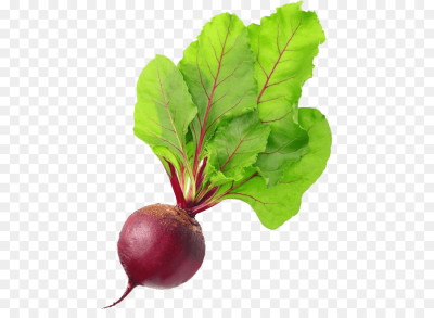 Organic food Beetroot Vegetarian cuisine Chard - vegetable png ...