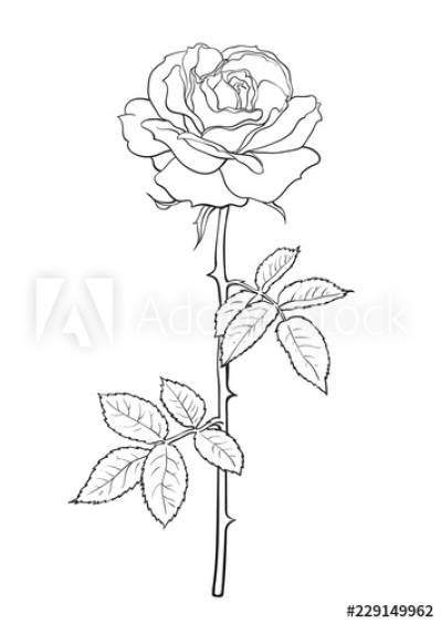 Black and white rose flower with leaves and stem. Decorative ...