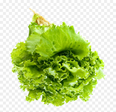 Romaine lettuce Vegetarian cuisine Leaf vegetable Salad Red leaf ...