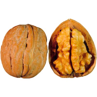 Walnut PNG Free Download