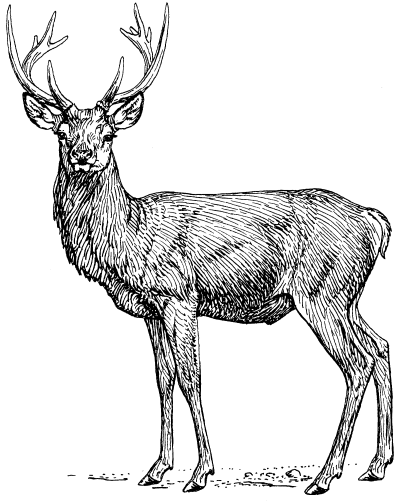 File:Stag (PSF).png - The Work of God's Children