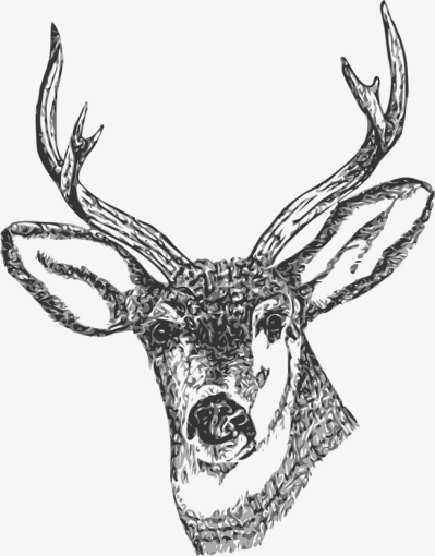 Stag Horn And The Head, Head Clipart, Head, Stag PNG Image and ...