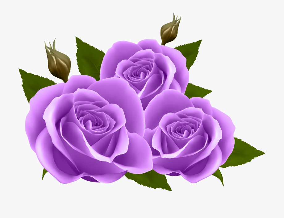 Purple Rose Clipart Transparent Background - Transparent Purple ...