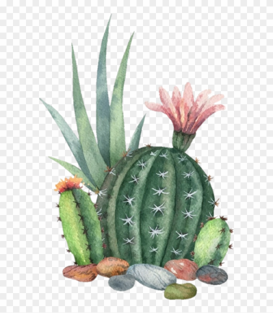 freetoedit #ftesticker #cactus #succulent #plant #colorful ...