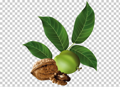 Eastern black walnut Vegetarian cuisine , walnut PNG clipart ...