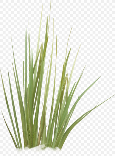 Green Grasses Plant Stem Family, PNG, 1342x1824px, Green, Family ...