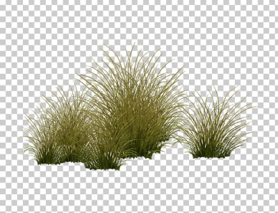 Vegetation Shrubland Tree Grasses Plant PNG, Clipart, Aquatic ...