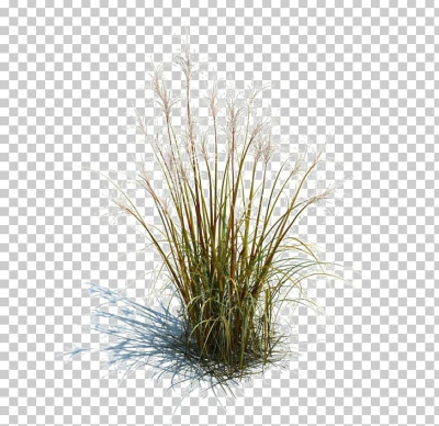 Tallgrass Prairie Ornamental Grass Grasses Lawn Ornamental Plant ...
