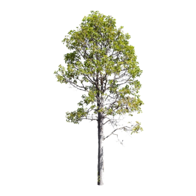 Isolate Trees On White Background Collection Of Trees, Woody Plant ...