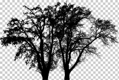 Tree Branch Woody plant Oak Arbre d'alignement, tree PNG clipart ...