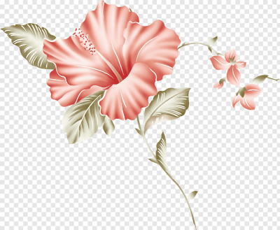 Mallows Flowering plant Hibiscus Cut flowers, hibiscus PNG | PNGWave