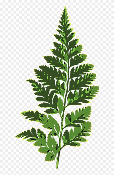 Fern Leaf Green Nature Plant Png Image - Fern Leaf Clipart ...