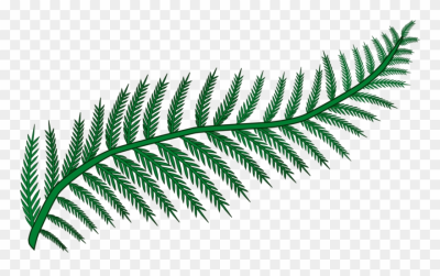 Fern Frond Plants Leaf Vascular Plant - Transparent Background ...