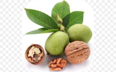 Eastern Black Walnut English Walnut Health, PNG, 512x512px, Walnut ...