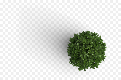 Grass Background png download - 700*600 - Free Transparent Plant ...