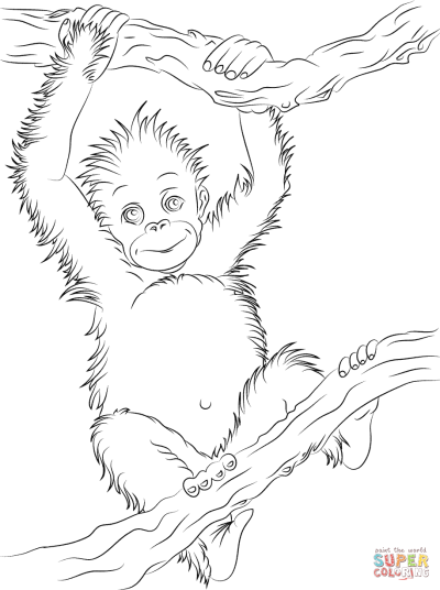Cute Baby Orangutan | Super Coloring | Baby orangutan, Monkey art ...