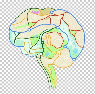 Brain Mapping Human Brain Neuron Euclidean PNG, Clipart, Area, Art ...