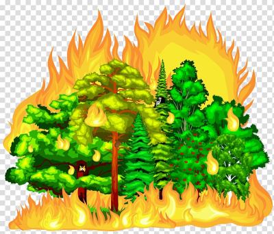 Forest fire transparent background PNG clipart | HiClipart