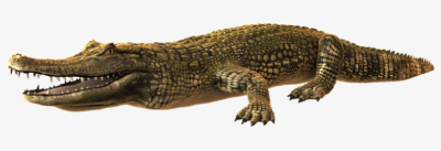 Alligator Png Photo - Crocodiles - Free Transparent PNG Download ...