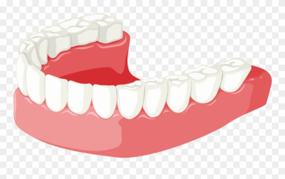 Free Png Download Lower Jaw Clipart Png Photo Png Images ...