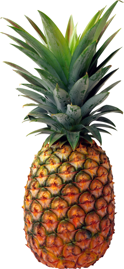 background-Pineapple-transparent