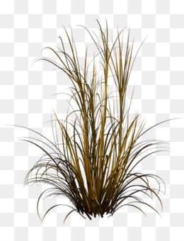 Fountain Grass PNG and Fountain Grass Transparent Clipart Free ...