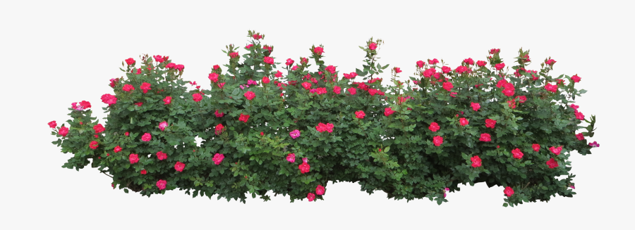 Hedges Clipart Flower Bush - Bushes Png , Free Transparent Clipart ...