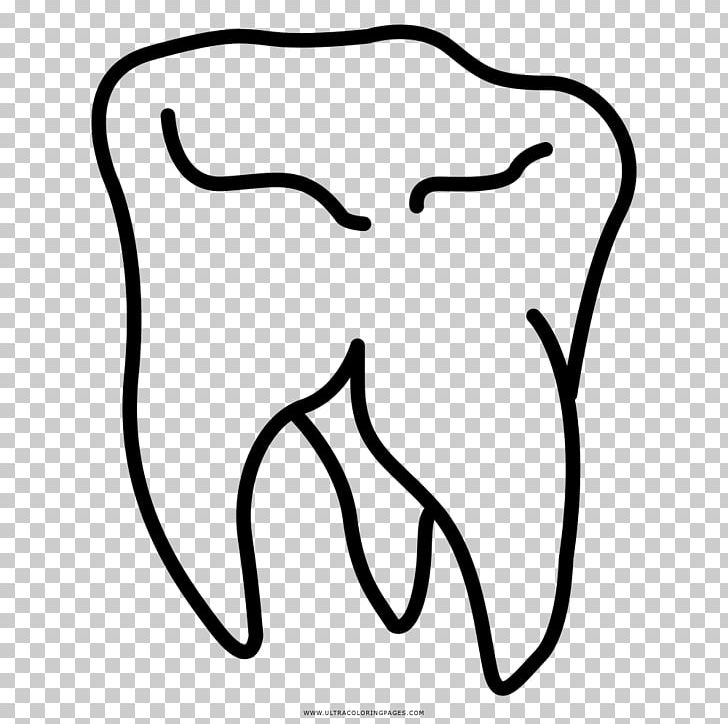 Wisdom Tooth Drawing Coloring Book PNG, Clipart, Area, Art, Black ...