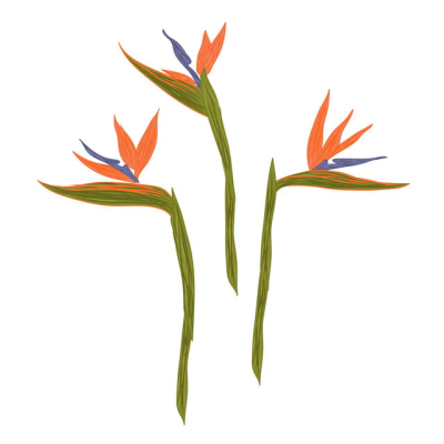 Bird Of Paradise Flower Illustration, Flower, Leaf, Summer PNG ...