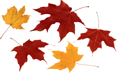Autumn Leaves, falling leaves, fall colors, leaf shapes | Png ...