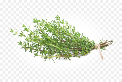 Summer Plant png download - 800*600 - Free Transparent Thyme png ...