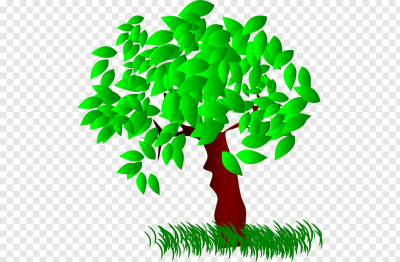 Tree Quercus bicolor Swamp Spanish oak Pruning, Summer Tree s PNG ...