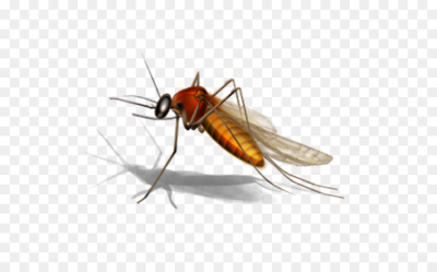 Mosquito Insect png download - 556*556 - Free Transparent Mosquito ...