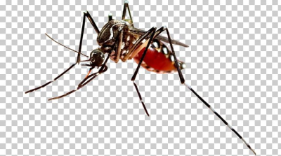 Dengue Fever Mosquito-borne Disease Virus PNG, Clipart, Arthropod ...