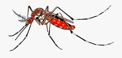 Cartoon, Mosquito, Spreading - Dengue Png , Transparent Cartoon ...