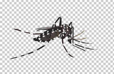 Yellow Fever Mosquito Insect Dengue PNG, Clipart, Arthropod ...