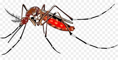 Yellow Fever Mosquito Fly png download - 1280*640 - Free ...