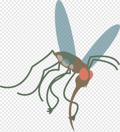 Mosquito Insect Aedes albopictus, mosquito, insects, my Little ...
