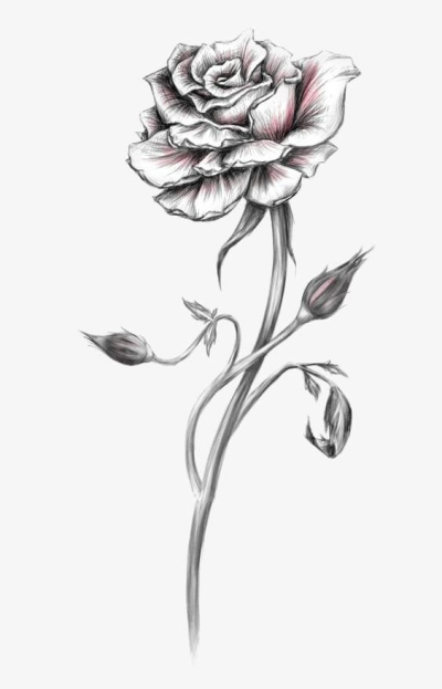 Rose Sketch PNG, Clipart, Abstract, Backgrounds, Buckle ...