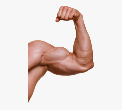 Muscle Arm Png - Muscle Arms Png, Transparent Png , Transparent ...