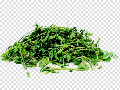 Silage Alfalfa Straw Fodder Seed, alfalfa transparent background ...