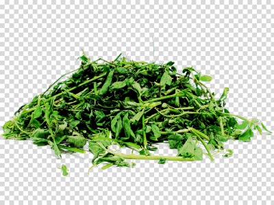 Sheep Ahuntz Alfalfa Silage, sheep, leaf Vegetable, animals, sheep ...