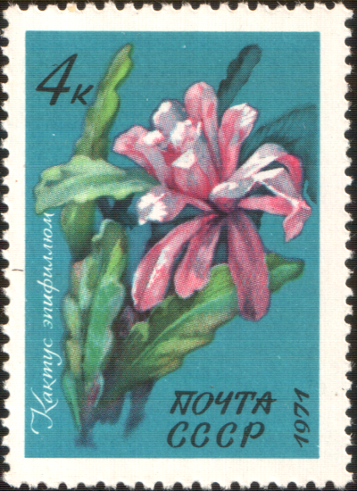 File:The Soviet Union 1971 CPA 4082 stamp (Cactus Epiphyllum).png ...