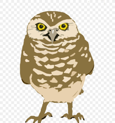 Burrowing Owl Great Horned Owl Clip Art, PNG, 768x875px, Owl ...