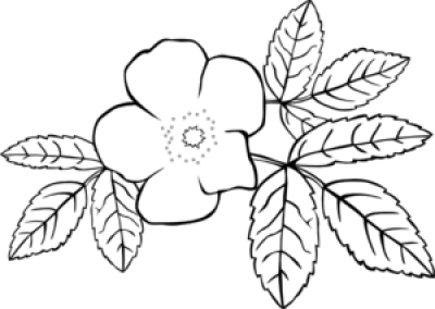 Prickly Wild Rose Coloring Page Clip Art at PNGio - vector ...