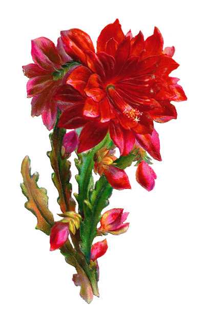 transparent beautiful flowers png - Clip Art Library