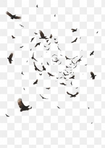 Crow Images, Crow Transparent PNG, Free download