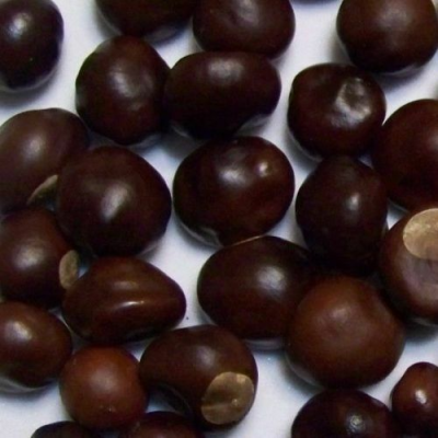 Ohio Buckeye Nuts Buy 1 10 25 50 or 100 Dried 2018 Crop Lucky Go ...