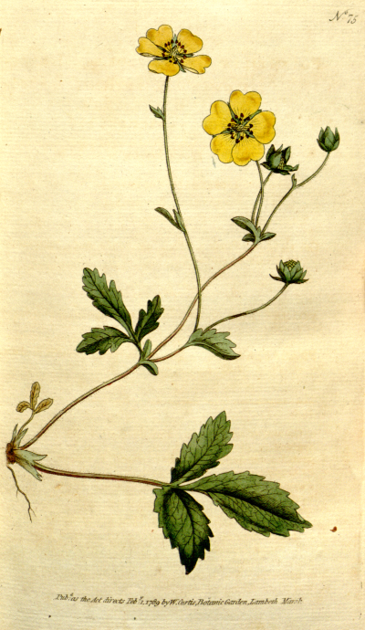 File:The Botanical Magazine, Plate 75 (Volume 3, 1790).png ...